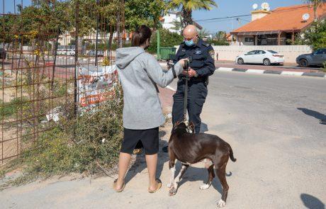 על יציאות לא במקום – משלמים: מבצע האכיפה נגד השארת צואת כלבים ברחוב