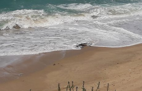 למה חופי הים באשקלון מלוכלכים?