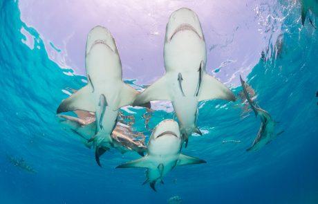 כרישים בחופי אשקלון הדרומיים