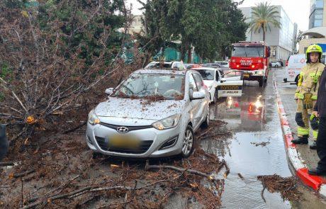 מבהיל! שוב זה קורה באשקלון – עץ קרס על רכב בזמן נסיעה