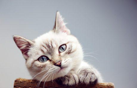 איך לבחור אוכל לחתולים בצורה הנכונה ביותר