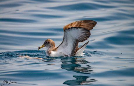 צפו: תיעוד מלהיב של להקת דולפינים שלך ויסעורים מלווה הפלגה של היחידה הימית ברשות הטבע והגנים